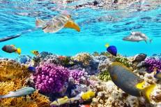 Aussie Reef