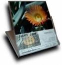calendar box article